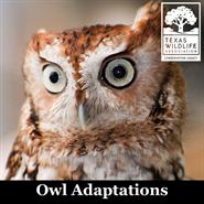 Animal Encounters: Owl Adaptations