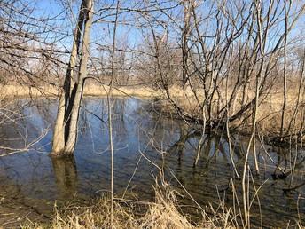 Wetlands Revitalization Project