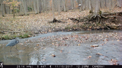 Blue heron caught on game camera at Spruce Run