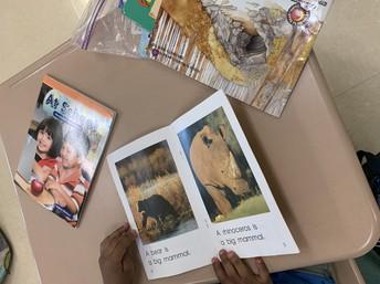 Becoming nonfiction experts in Kindergarten