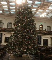 The tree at the Capitol