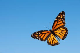 Monarch Butterfly Day @ Milesquare Regional Park