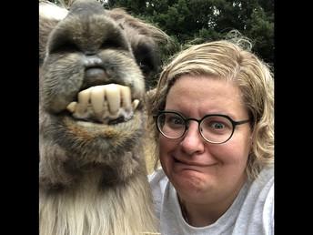 This is a Llama with big bottom teeth!!!