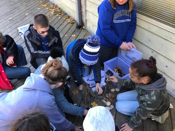 Hatchet Survival Challenge