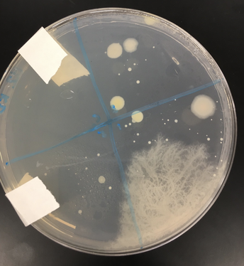 Biology Samples Bacteria around Campus