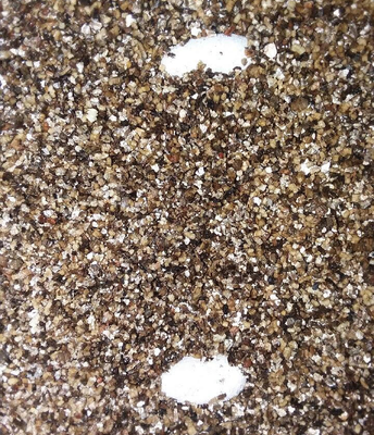 Leopard Gecko Eggs