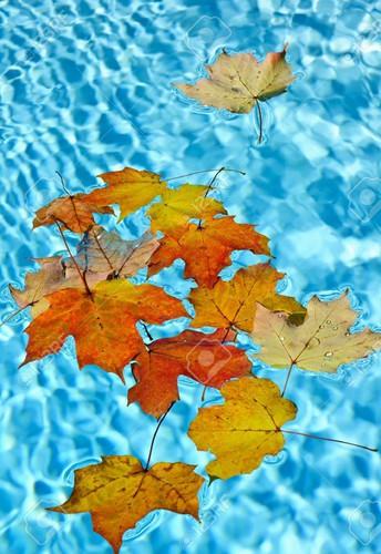 Pool News
