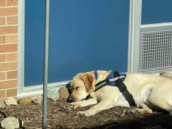 Therapy dog Blue takes a nap outside in the courtyard while the sun shines.