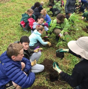 Rm 9 in the Huatoki Domain - Arbor Day