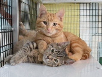homeless kitties