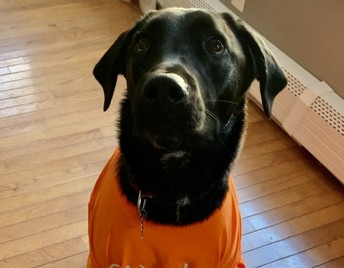 Pup wearing orange for unity day