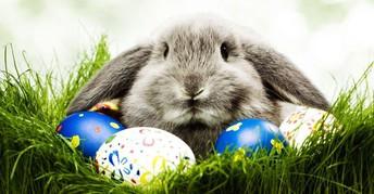 JVFC Easter Bunny Event
