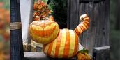 Oct 29 - Punkin' Chuckin' & Halloween Fun