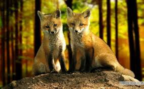Fox Contact Info and Social Media Pages