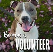 Humane Society of Greater Rochester