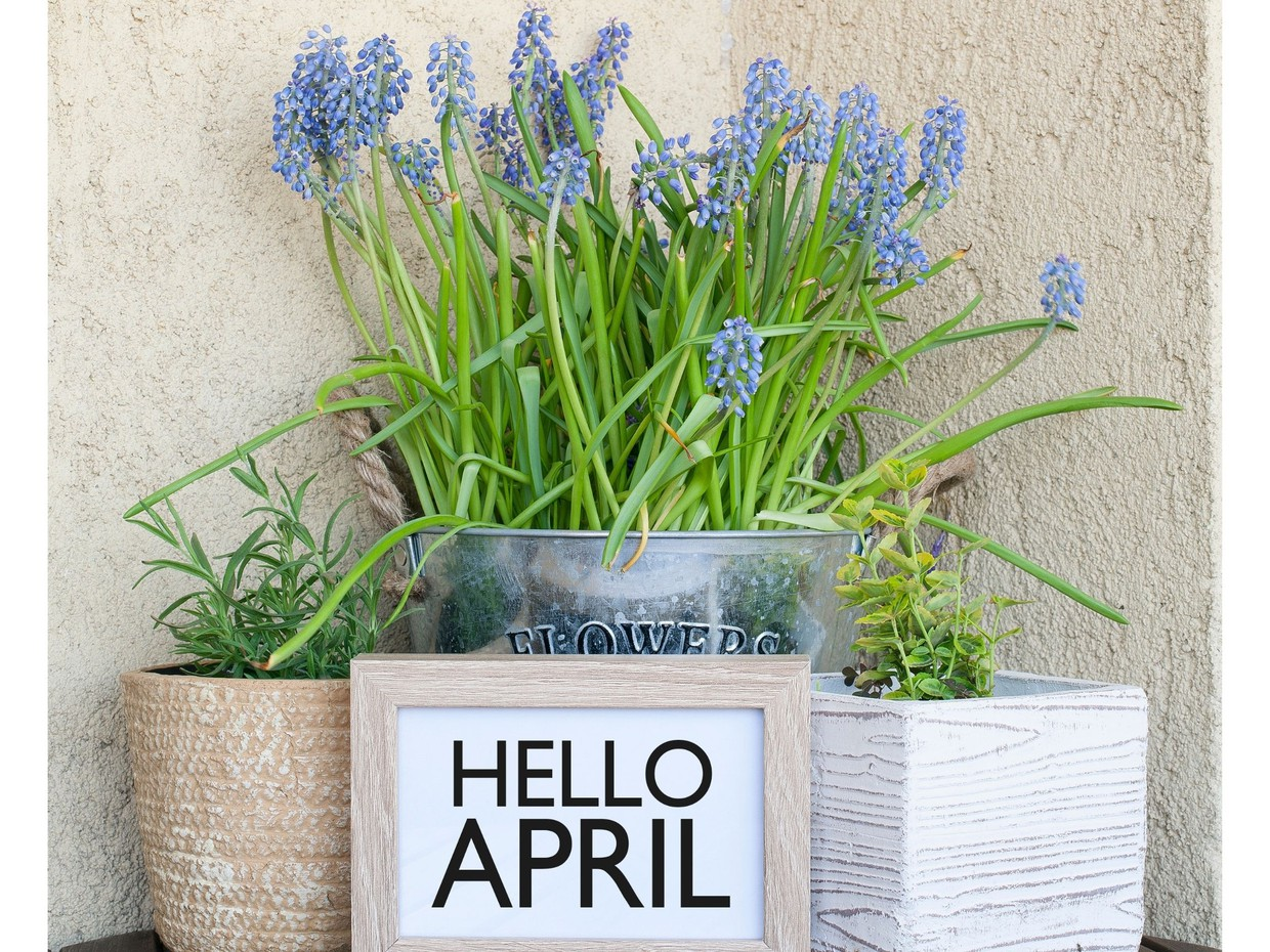 """A fun bright photo with plants in vases, blue flowers are in the main planter with a small sign below reading """"hello april"""""""