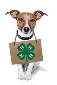 4-H State Dog Show