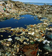 Negative effects of pollution in water