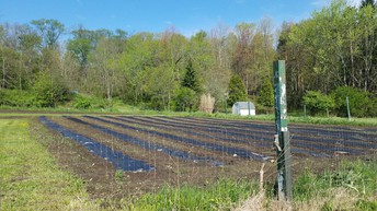 Back Field