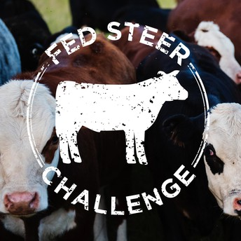 Fed Steer Challenge