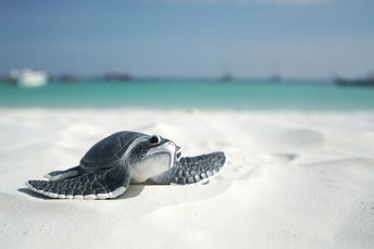 Read with Us: Sea Turtles