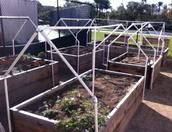 Drip System in BHS Garden