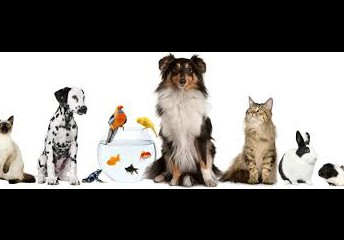Student Favorite Pet Contest!