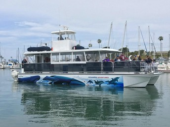 Oceanside Adventures - Whale Watching