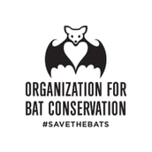 Bat Program with LIVE Bats!!!
