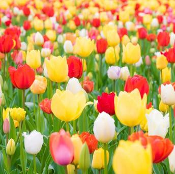 Flower Sale Pickup Information
