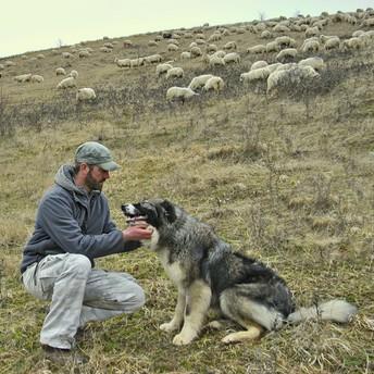 Ray Dorgelo - Canine Efficiency