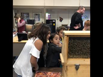 Omar loving Treasure Valley Beekeepers