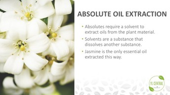 Absolute Oil Extraction