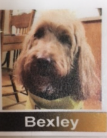 Therapy Dog Bexley