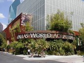 Field Trip - Dallas World Aquarium