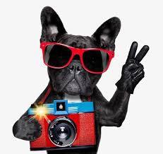 Picture Day Is Coming Up!/ ¡Se acerca el Día de las fotos!