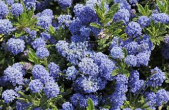 Gardening at Home and Why California Natives Are the Best to Plant  By: Izabel Sharp