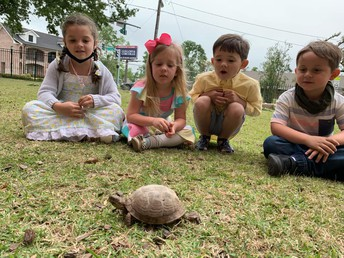 """PK CLASS PET IS """"TURTLEY"""" AWESOME"""