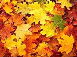 Find Some Beautiful Fall Leaves