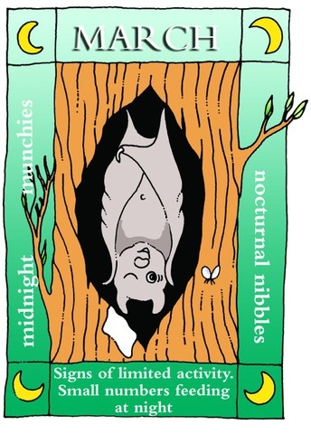 March bat news!