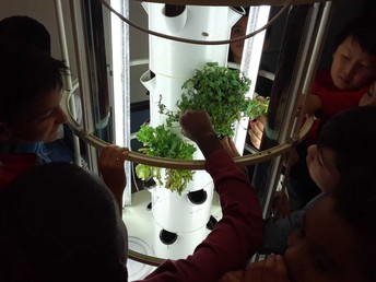 Aeroponics System of Growing Plants