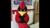 The Cardinal!