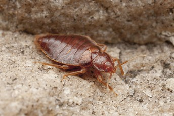 How to Know If You Have a Bed Bug Problem in Fort Wayne