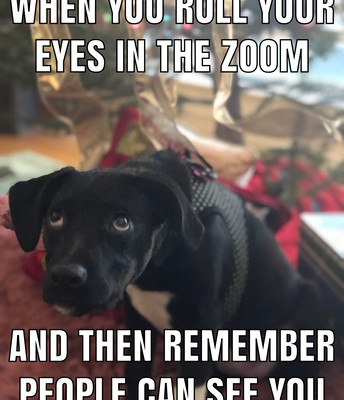 A little meme of the principal's pup!