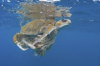 Una vez que hayamos matado el océano, no podremos volver atrás