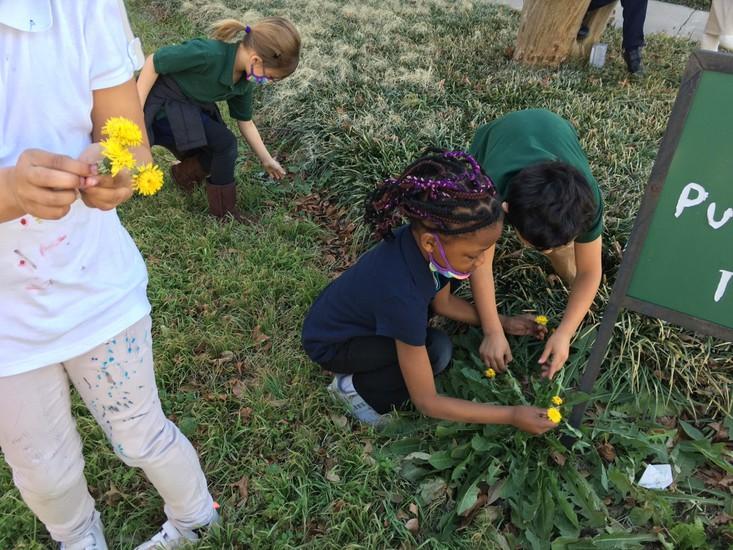 "Ms. Rayner's Kinder class helped pick ""dientes de león"" – dandelions – for Fredi!"