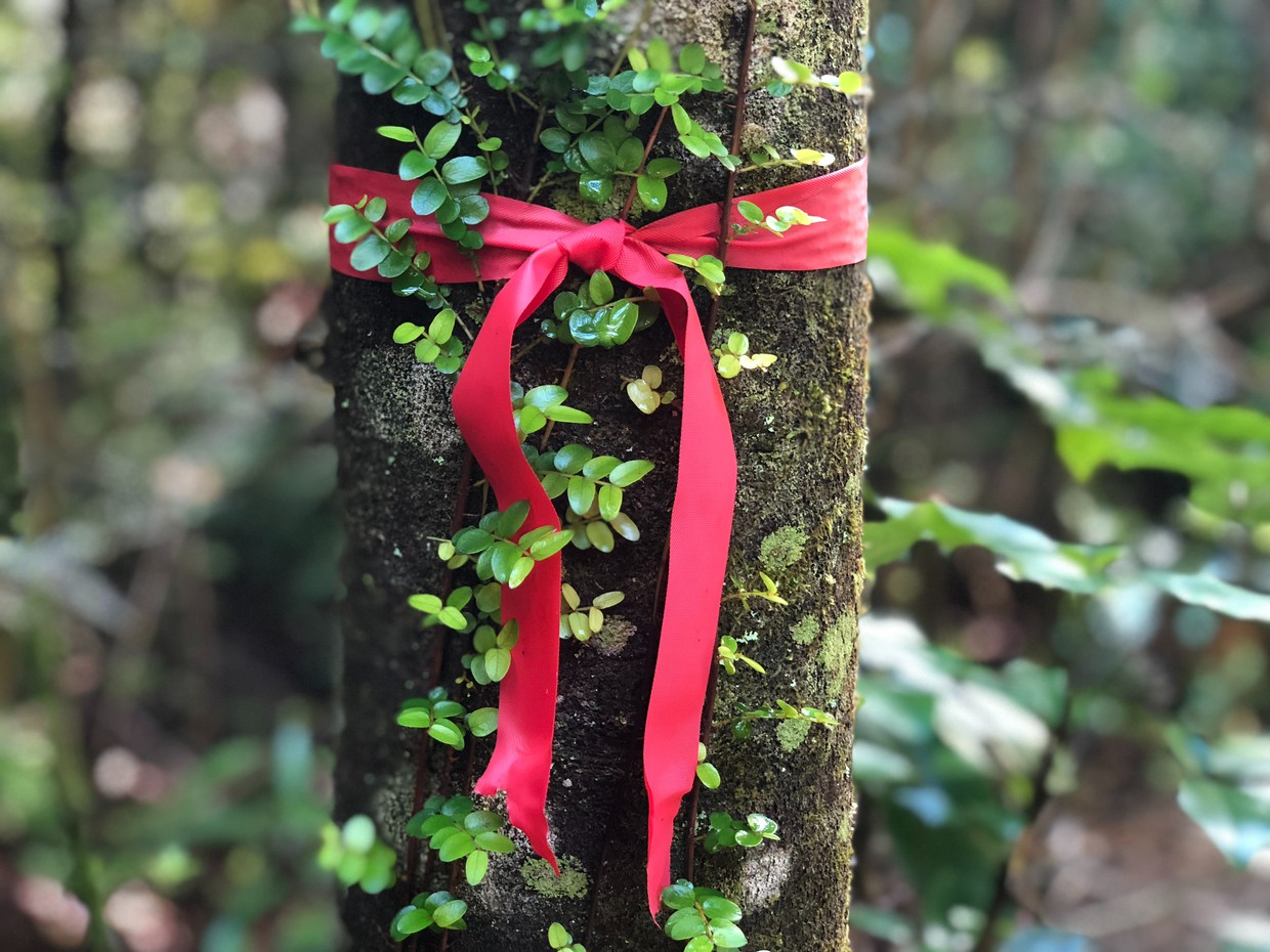 Red Ribbon tied on a tree