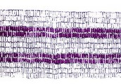 """A Short Introduction to the Two-Row Wampum"""