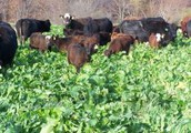 2017 Indiana Forage Council Meeting Scheduled in Fishers