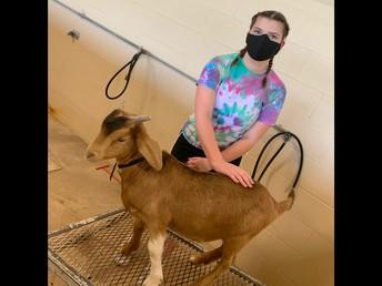 Peyton Taylor with her goat, Klaus.